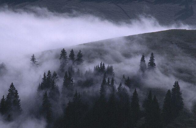 File:Misty forest2.jpg