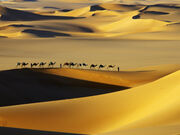 Haglund-johnny-tuareg-nomads-with-camels-in-sand-dunes-of-sahara-desert-arakou
