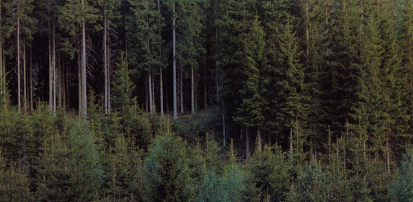 File:Large forest.jpg