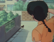 Ranma sees Black Piglet