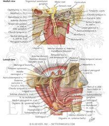 Infratemporal Fossa Nerves