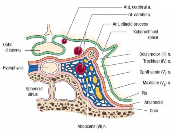 cavernous sinus