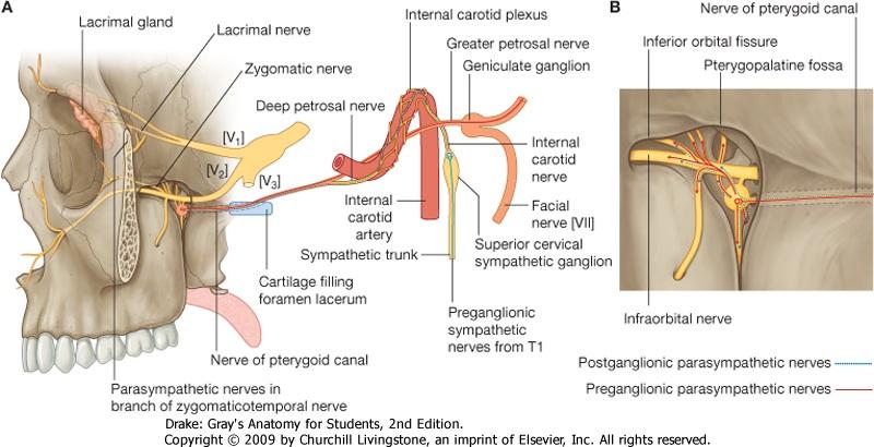 Infratemporal Fossapterygopalatine Fossa Ranzcrpart1 Wiki
