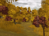 Harvesting Woods