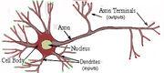 Nerve conversion