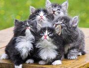 KittensLookingUp