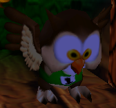 Racing Owl
