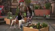 Dogsitting For Wynia