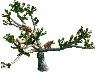 Jungle Tree with Leopards
