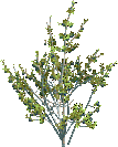 Jungle Tree 2