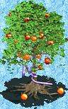 Forbidden Fruit Tree