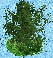 Old Overgrown Tree