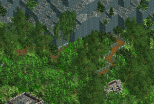 Rain Forest Plateau