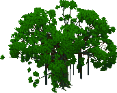 Jungle Tree with Vines