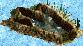Giant Dinosaur Footprint