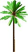 North America Themeing Palm Tree 1
