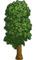 RCT 1 Tree 04.png