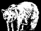 Piel de oso pardo