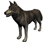Lobo mexico2