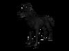 Lobo the wolof