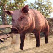 250px-Pig-clean-03