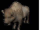 Bisonte albino