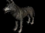 Lobo mexico1