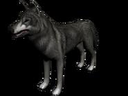 Lobo norte1