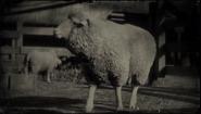 SheepRDR2