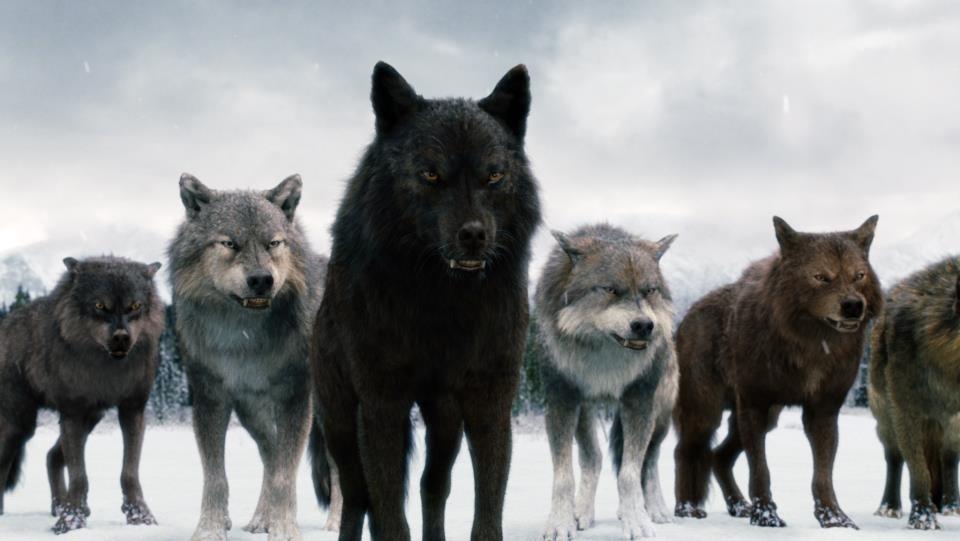 Image Twilight Saga Wolves The Twilight Saga Vampires