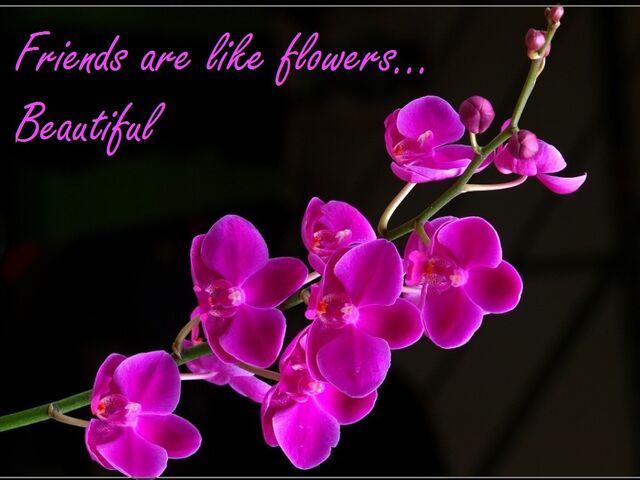 File:Friends are like flowers.jpg