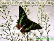 Friendship-wallpaper-05