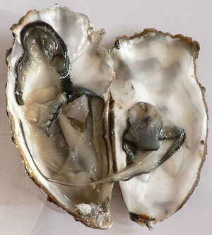 Gigas oyster