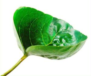 Cup leaf