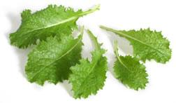 Tyfon greens