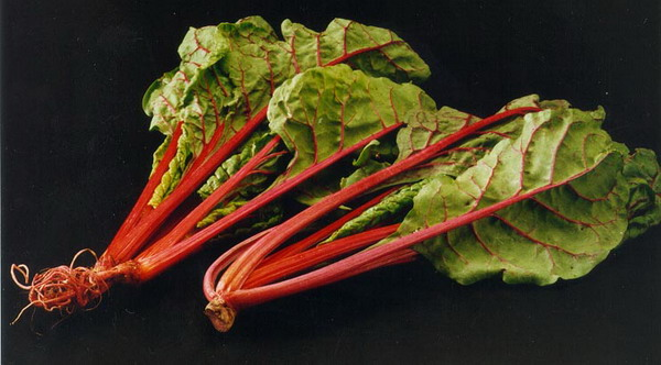 Swiss Chard Recipes Wiki Fandom Powered By Wikia