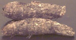 Malanga root