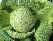 Irishcabbage