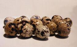 Quail+Eggs-517
