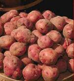 Potato 02