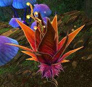 Embereyes Plant