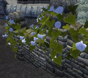Alessian Ivy plant