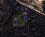 Purple Dig Spot