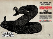 Rattlesnake11