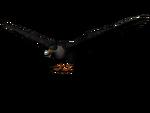 Adler3D
