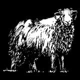 Schafhaut