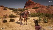 Pferd Töten