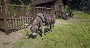 Esel-RDRII