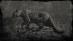 """Legendärer Panther """"Giaguaro"""""""