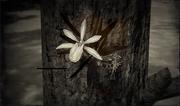 Pflanzen (Kompendium)